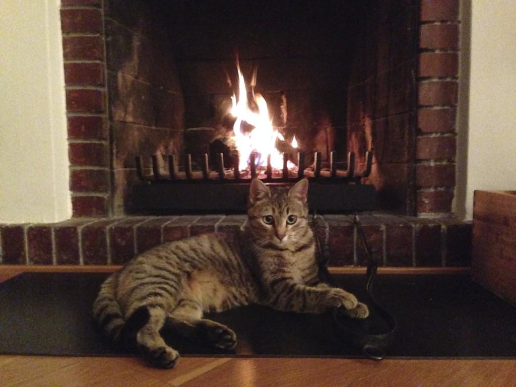Cat & Fireplace   -iStock_000032685452_Medium